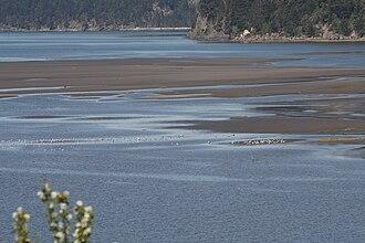 Skagit Bay - Skagit Bay mudflats with Goat and Ika Islands
