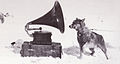 Sled dog and gramophone - Terra Nova Expedition.jpg