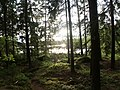 Small lake in forrest - panoramio.jpg