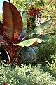 Smithsonian Gardens in October (22733804812).jpg