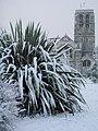 Snow in Exeter - geograph.org.uk - 1149506.jpg