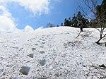 Snow trail (9047584206).jpg
