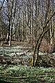 Snowdrop Festival - geograph.org.uk - 1761756.jpg