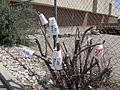Sonic cups, Albuquerque NM.jpg