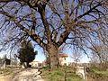 Spinetoli, Province of Ascoli Piceno, Italy - panoramio - adbascoli.jpg
