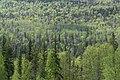 Spring Forests (3559726177).jpg