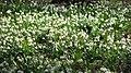Spring in Botanic Garden Cluj-Napoca (2345163849).jpg