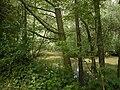 Springbrook Creek 02.jpg