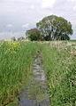 Sproatley Drain - geograph.org.uk - 428537.jpg
