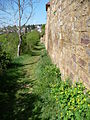 Stadtmauer Neuleiningen- 06.JPG