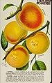 Stark fruits (1896) (20550907661).jpg