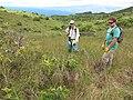 Starr-110924-9550-Syzygium cumini-habit with Kim and Greg-Makamakaole-Maui (25021792871).jpg