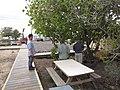 Starr-121219-1193-Cordia subcordata-habit with Kurt Lance and Kim setting up fruit fly trap-Honokanaia-Kahoolawe (25080237122).jpg