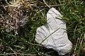 Stein in Herzform.jpg