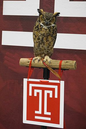Temple Owls - Stella, the Temple mascot