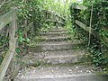 Steps leading out of Candy's Pit - geograph.org.uk - 1286513.jpg