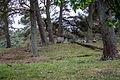 Stoerkathener-Heide Kellinghusen SH (42).jpg