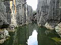 Stone Forest (48620575913).jpg
