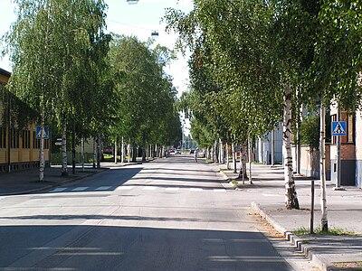 Storgatan i Umeå med sina björkar