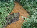 Stream flowing red - geograph.org.uk - 40821.jpg