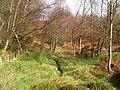 Stream near boundary wall and fence - geograph.org.uk - 1187838.jpg