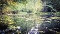 Stromberg pond.jpg