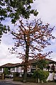 Sudden Oak Death^ - geograph.org.uk - 960203.jpg