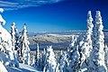 Sun Peaks Ski Resort - more shots amongst the snow ghosts (13653697664).jpg