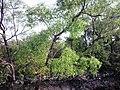 Sundarban (48).jpg