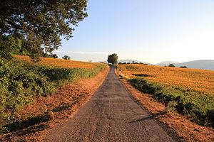 Sant'Ippolito - Rural landscape in Sant'Ippolito