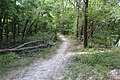 Suwannee River State Park Suwannee River Trail 2.jpg