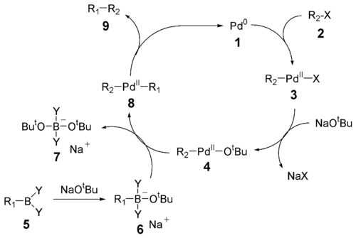 The mechanism of the Suzuki reaction