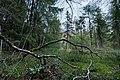Swamp forest of Palokallio conservation reserve in Kuninkaanmäki, Vantaa, Finland, 2021 April.jpg