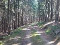 Szlak wokół Raduni - nucek - panoramio.jpg