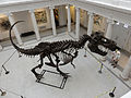 T Rex at NOMA from above.jpg