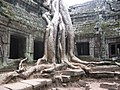 Ta Prohm, Angkor - panoramio - Colin W (2).jpg