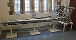 Tailplane of Vickers Warwick ASR.VI -HG136- (25896827728).jpg