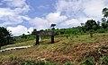 Taninthayi Nature Reserve.jpg