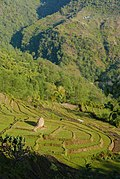 Terraced farms in the Himalayas.jpg