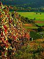 The Autumn Plays - panoramio.jpg