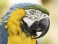 The Beak (32291381).jpeg