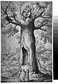 The Beech Tree of the Madonna at La Verna MET 032.2r2 54K.jpg