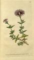 The Botanical Magazine, Plate 70 (Volume 2, 1788).png