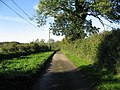 The Lane From Cranworth - geograph.org.uk - 293367.jpg