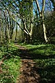 The Usk Valley Walk, Cat's Ash - geograph.org.uk - 1254200.jpg
