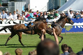 Thoroughbred racing in New Zealand