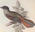 The birds of Europe (1837) (14565341099).jpg