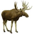 The deer of all lands (1898) Elk white background.png