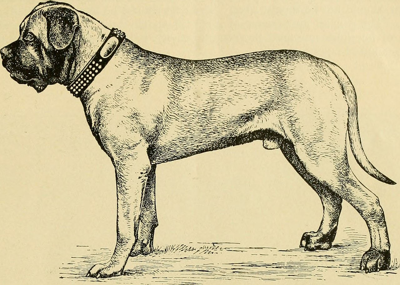 the history of dog From beloved family dog to media pariah and back again.