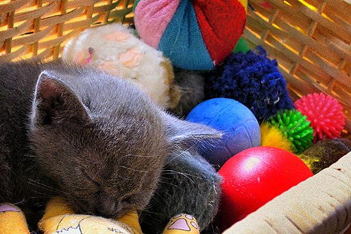 The kitten and its toys
